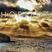 Horizon Podcast 001