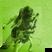 The Dandelion Set's profile picture