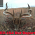 Take Aim Outdoors - Rut Report Ep-154 W/Reddog Outfitters