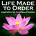 Life Made to Order #111: Law of Attraction: Slow and Steady Wins the Race