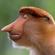 12-12-2020 new monkey tale image