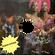 Disco-Funk Vol. 178 image