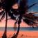 COASTALdrop-outSERVICE #117 >GENTLE BREEZE & STARRY NIGHT< image