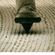 Covid 11 image