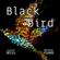 Black bird image