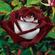 Lunar Rose image