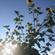Wenn Wind Die Sonne Liebt #2 (Michael Rausch Live Mix) image