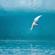 Tình Em Là Đại Dương (9X) - Nghiêm! image