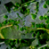 Twin Peetz : Microscopic 040 (November 2018) (recorded set @ lsb02) image