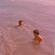 Francisco y Madero - (casi) puras oldis vol i image