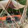 Aliss In Techno @ Musikalisches Natur Erlebnis Camp @ Hauenstein 27_06_2020 image