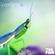 TFM & Side Brain - Green Spring image