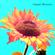 088 - Organic Blossom image