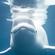 Liquid Whale Music image