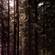 nielot | darkelicious xi | 12.06.20 image