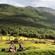 Forest tales @Ushuaia fin del Mundo _ Yana Leles & Solguin _ pt 1 image