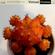 Virtual Crates 68 - Fragile Parasite image