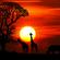 Oliver Koletzki - Sunset at AfricaBurn by MichaaaFM image