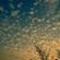 plicploc - gazoullis et friselis (2016) (radio Musiq'3) image