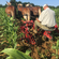 The Laborious Hour - Mule Powered Sorghum Cultivation Pt. 2 (24/11/2019) image
