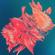 Hypnotica   Flyco@Desert Bass 2019 image