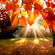 From Dawn To Autumn Party 2014 image