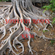 SOULFUL ROOTS image