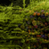 Twin Peetz : Microscopic 035 (April 2017) image