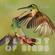Flight of birds image