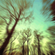 RestInPsy- Dark forest set 2018 image