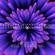 Nightexpress image