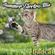 badcat's Summer Electro Mix image