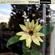 Virtual Crates 70 - Flower Power image