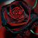 BLACK ROSE 594 22/12/2018 image