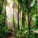 Jungle Riddims Vol 3 Vinyl Mix-10th Sep 2020 image