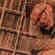 Backseat Mafia - BARRcode Resident Mix 004 image