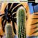 Virtual Crates 56 - Cactus Panic image