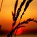 Sunset Vibe Pt. 2 (April 2014) image