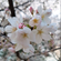 kicikk - Kwiecień 2018 Cherry Blossom Deep Mix image