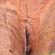 Canyon α hot 2016 image