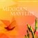 Mexican Mayflies image