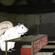 Between Rivers Halloween Rat image