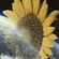 Hunee - The sun is out! (livestream in lockdown, january 26 2021) image