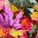Indie español para una tarde de otoño (vol.2) image