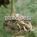Pure Soil – 10th June 2020 image