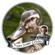 Minimix for WMFU's Frame Duggy Louder 250 image