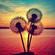 LayDee Divine - Trance Memories image