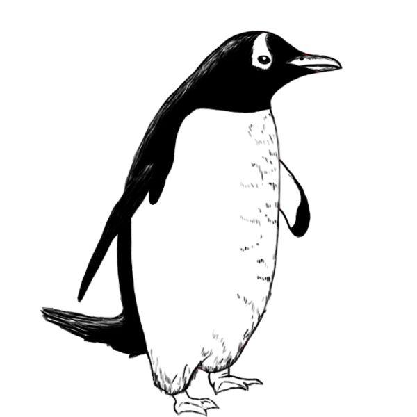 если обеспечить пингвины картинки черно белые изысканного