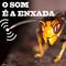 20190206_RM_SOMENXADA #81 ............. Nas asas da predadora: a vespa asiática!