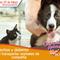 Derechos y deberes al momento de viajar con animales de compañía